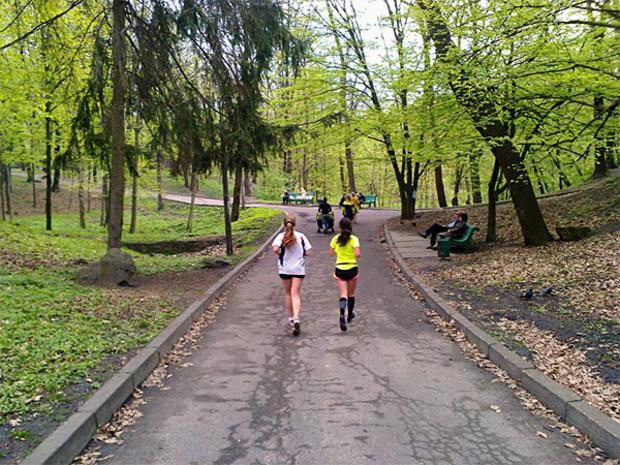 СБУ вырубает деревья в Голосеевском парке под «социальное жилье» для военных